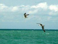 Кілька цікавих фактів про Чорне море