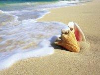 Яке море корисніше?